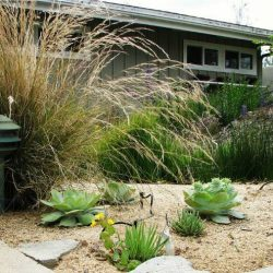 A beautiful, mature native plant landscape by Back to Natives.