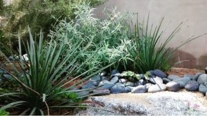 native plant landscape8